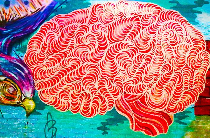 amygdala2_main