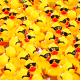 ducks_feature